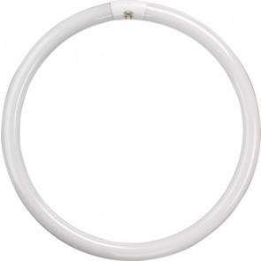 T5 Circular Tube - 22W - Cool White