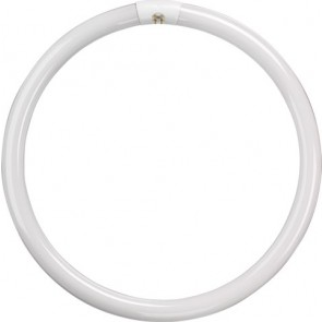 T5 Circular Tube - 55W - Cool White